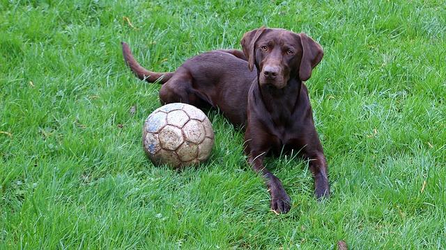 pes a míč